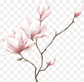 Download Flower Real PNG