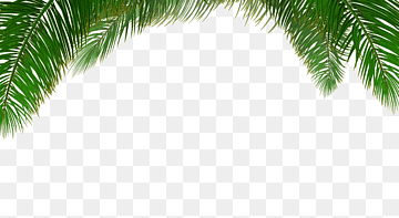 Download Tree Palm PNG