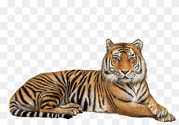Download Tiger Mammal PNG