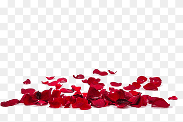 Download Rose Red PNG