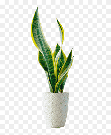 Download Green Plant PNG