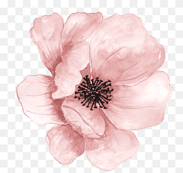Download Flower Painting PNG