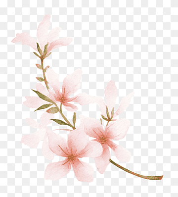 Download Peach Plant PNG