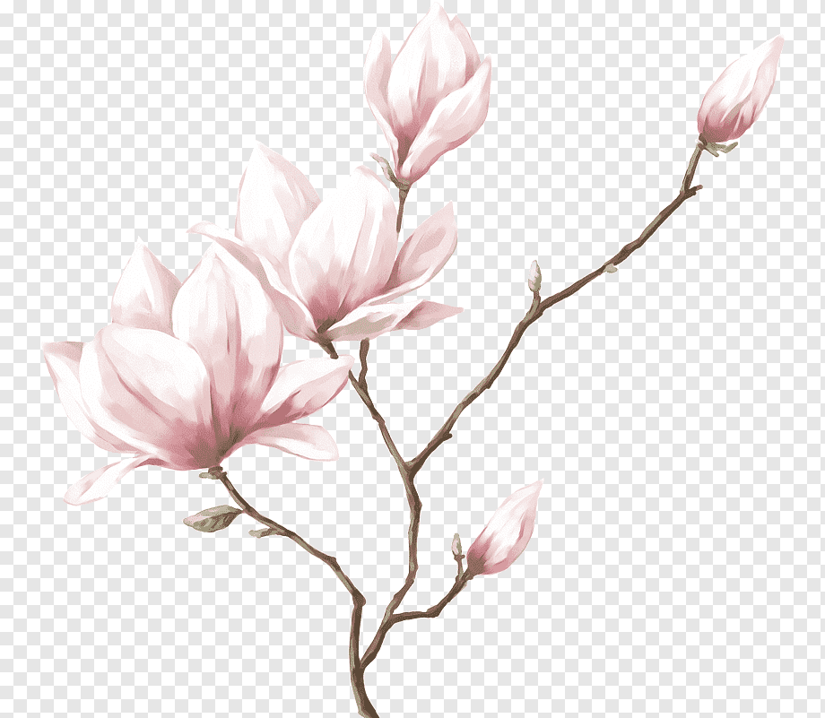 Download free Flower Real PNG