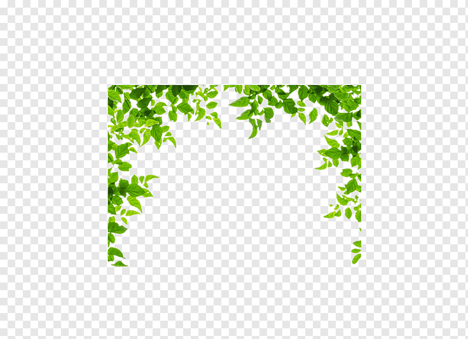 Download free Leaves Green PNG